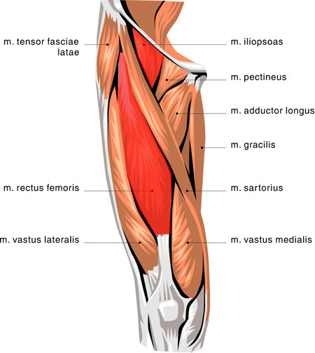 hip flexor and adductor tendonitis